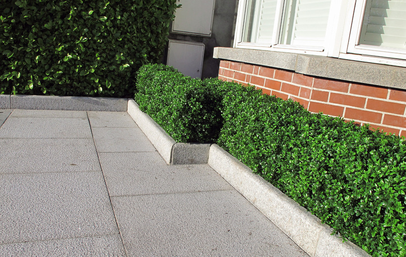Medium synthetic Box Hedge - perfect for a lush finish and zero maintenance