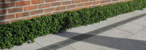 Artificial Box Hedging | Artificial Boxwood Hedges |  On sale now at Owen Chubb GardenStudio, Terenure. 087-2306 128
