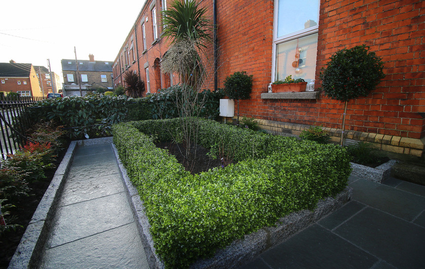 Artificial Boxwood Hedging installation in Harolds Cross
