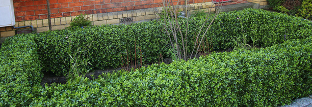 Artificial Boxwood Hedging on sale at Owen Chubb GardenStudio | BEST PRICES in Dublin | Tel 087-2306 128