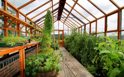 Plenty of room to grow and thrive in our Classic Twelve Timber Greenhouses