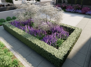 3D Design Visual illustrating a feature island bed, planted with clipped Buxus hedging, a central feature tree and mixed herbaceous flowering plants | Owen Chubb Garden Design, Tel 087-2306128