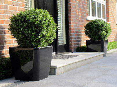 Artificial Box Spheres at House Entrance in Blackrock garden