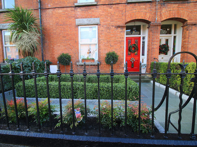 Medium Boxwood Hedging in Front garden, Harolds Cross, Dublin