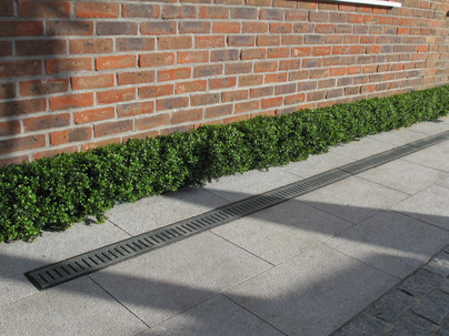 Small Boxwood Hedging in Front garden, Blackrock, Co Dublin