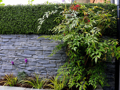 Boxwood Wall Cladding & Privacy Screening in Ballsbridge garden