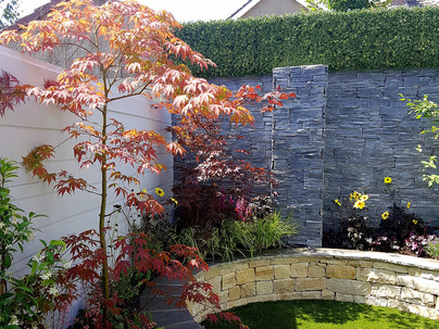 Boxwood Wall Cladding & Privacy Screening in Drumcondra garden