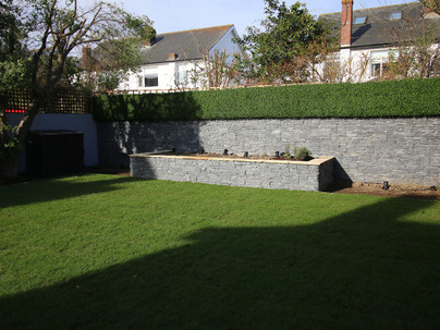 Boxwood Wall Cladding & Privacy Screening in Terenure garden