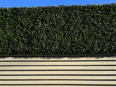 Boxwood Wall Cladding & Privacy Screening in Ranelagh garden
