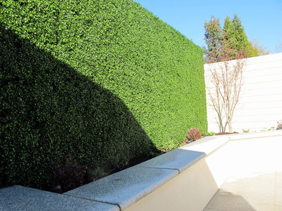 Boxwood Wall Cladding & Privacy Screening in Castleknock garden